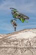 Monster Energy's Brett Turcotte Takes Silver in Snowmobile Best Trick at X Games Aspen 2017