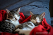 Katzenworld's latest guide on Cat Care Tips for First-Time Cat Owners