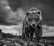 """Funnel Creek"" by David Yarrow will also be included in the wildlife photography exhibition at the WRJ Design showroom starting Feb. 20, 2017 (© David Yarrow)."