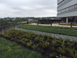 Pacific Earth Works covered more than 11,000 square feet with a green roof on the fifth floor of the Bellevue City Hall parking garage. This was a complex project which involved adding approximately 450 cubic yards of growing medium and 1500 bags of rock.