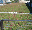 Pacific Earth Works, Inc. took on a large endeavor in completing a landscape and green roof installation as part of a new building construction. The rooftop required installation of a green roof tray system and sedum tile planting.