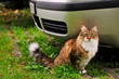 Katzenworld Presents Tips on How to Travel with Cats