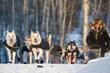 The Yukon Quest International Sled Dog Race Travels 1,000 Miles to Fairbanks, Alaska