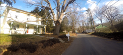Street view of the second largest Kentucky Coffee Tree in Pennsylvania before receiving a tree cabling service to protect its health.