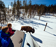 The Old Faithful winter trip from Wildlife Expeditions can spot wildlife such as bison while traveling through Yellowstone National Park's stunning landscapes (photo by Jay Goodrich).