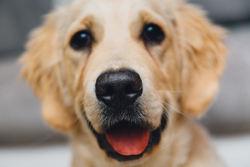 Wise Business Plans is pleased to serve custom pet food companies with complete, high-quality financial planning that can help owners and entrepreneurs grow a healthy, successful future.