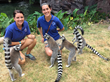 Lemur Forest Opens at the Tennessee Aquarium March 1