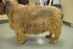 Obese Dog (c)APOP