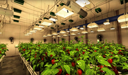 "View of Sunlight Supply's ""ultimate grow room""."