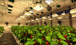 Sunlight Supply Launches VR Indoor Gardening Experience