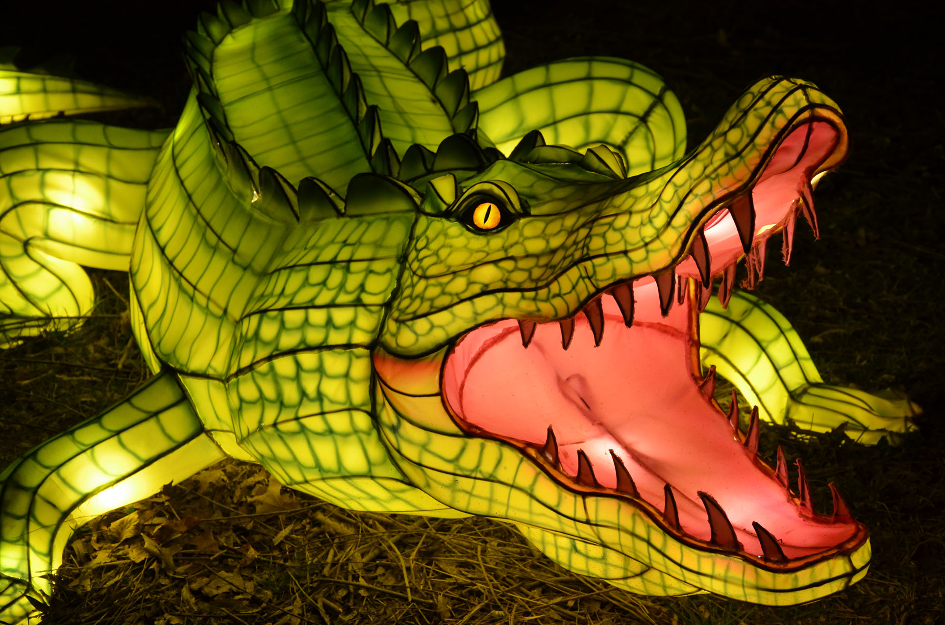 Chinese Lantern Festival S The Wild Exhibit Opens This