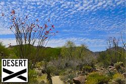 Desert X International Art Exhibition