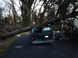 Large Fir Tree Slams into Car and House in Fierce Wind Storm and Requires Emergency Tree Removal by Giroud Tree and Lawn