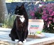 Katzenworld teams up with Protect My Pet to promote pet health