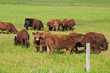 Kansas Department of Agriculture Launches First Cattle Brand Registration Program of Its Kind with Kelly Registration Systems Tool