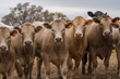 National Coalition Launches Pilot Research Project to Improve Sustainability in US Beef Industry