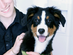 Happy, cute, healthy pet in the arms of caring staff