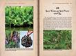 """Customs of Cambodia–Zhou Daguan"" - Salf, Vinegar, Soy Paste and Qu"