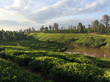 Crimson Cup Seeks Out New Coffees, Farmer Relationships in Ethiopia and Kenya