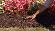 Mulch Gives Flowerbeds the Finishing Touch