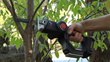 Use WORX Axis for pruning