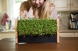 After Raising nearly $150,000 on Kickstarter, Crowdfunding for the Low-Maintenance, Economical Micro Veggie/Herb-Growing EcoQube Frame Continues on Indiegogo InDemand