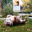 Schneider Insurance and Financial Announces Charity Drive to Support Local Wildlife Zoo and Botanical Garden, Zoo Montana