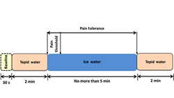 Block diagram of the cold pressor protocol; doi:10.1117/1.NPh.4.1.015004. Credit: the authors