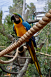 "Oakland Zoo Unveils New ""Progressive Design"" Aviary Exhibit"
