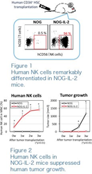 Novel Animal Model for Analyzing Human Natural Killer Cell Functions In Vivo