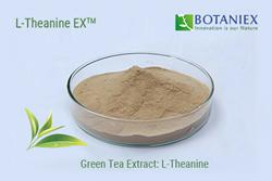 Green Tea L-Theanine