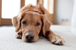 Carpet One Floor & Home Supports Dogs and Dog-Lovers through AKC Humane Fund