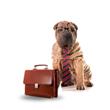 Blue Dog Business Services Hosts Local Job Fair