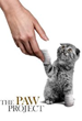 Canadian Veterinary Medical Association Announces Historic Shift, Now Opposes Declawing
