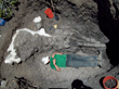 Beer and Science Converge in Ichthyosaur Expedition