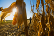 American Farmer to Explore Breakthroughs in Sustainability, Featuring Verdesian Life Sciences