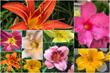 Courtyard Flowers
