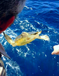 Crowley Mariners Demonstrate Environmental Stewardship with At-Sea Rescue of Sea Turtle