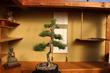 The #1 Online Bonsai Retailer Bonsai Outlet Announces the Acquisition of New England Bonsai Gardens