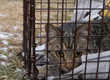 Alley Cat Rescue Launches Bold Initiative to Save Cats