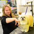 Camp Canine Named a Top Grooming Salon in New York City