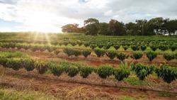 Brazil Farm Tours