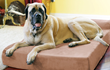 Big Barker therapeutic dog beds launch in the UK