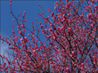 Best Arbor Day Gift for Trees Is to Catch Problems Early and Keep Trees Safe According to the Top 5 Spring Tree Care Tips from Giroud Tree and Lawn