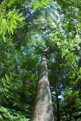 Lullwater Conservation Garden, Druid Hills, Georgia