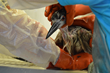 Oakland Zoo, Golden Gate Audubon, and International Bird Rescue Team Up to Save Wild Baby Herons in Downtown Oakland