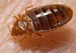Bed bug testing airmid healthgroup