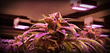 Illumitex Partners With Lightning Electric To Save Cannabis Growers Thousands Of Dollars On LED Lights