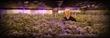 Rob Van Diest visits Sugar Leaf Farms in Bellington, Washington. Sugar Leaf uses Illumitex Power Harvest and NeoSol DS for flower and veg.