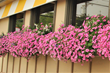WOWWindowboxes, Cincinnati, Outdoor Decor, Flower and gardening